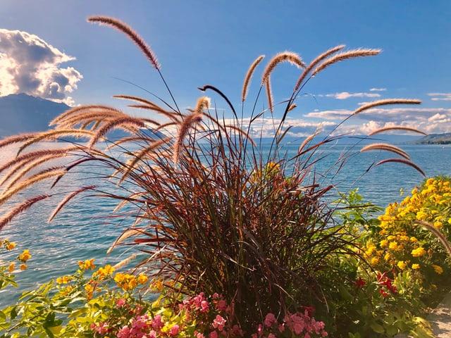 Blick über Blumen auf den See.
