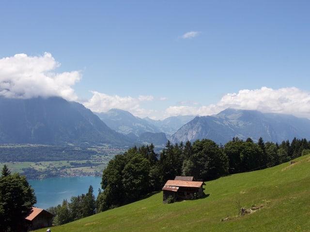 Blick von Habkern auf den Brienzersee. Grüne Landschaft und See.