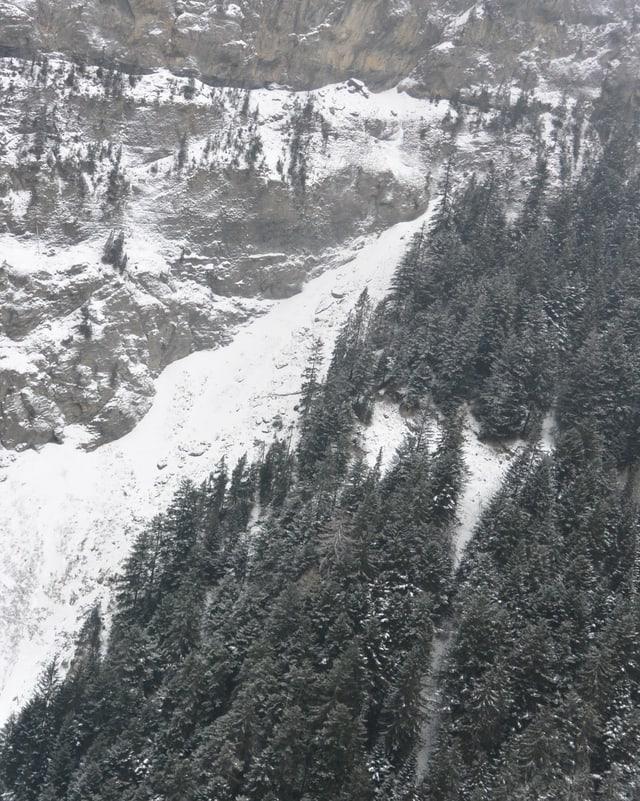 Wald und Felsen mit Schnee