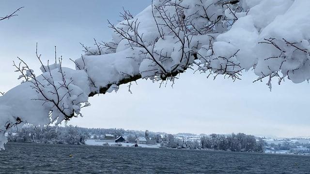 Blick über den Zürichsee zur Insel Ufenau.