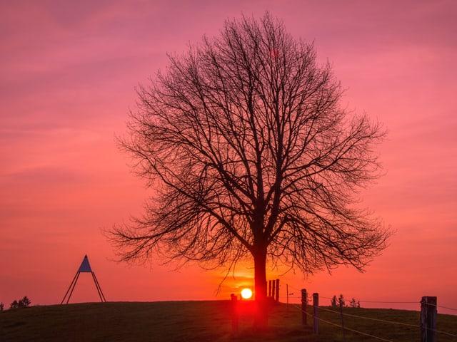 Die hinter einer Eiche untergehenden Sonne verfärbt den Himmel rot.