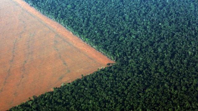 Diese Fläche wurde für den Sojaanbau gerodet.