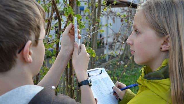Kinder vermessen eine Hasel.