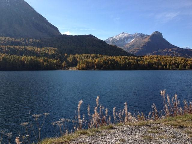 Ein See, im Hintergrund gelbe Lärchen.