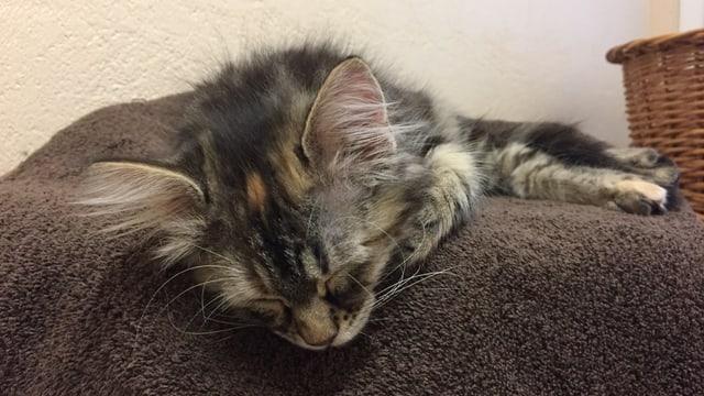 Schlafendes Kätzchen im Freiburger Tierheim