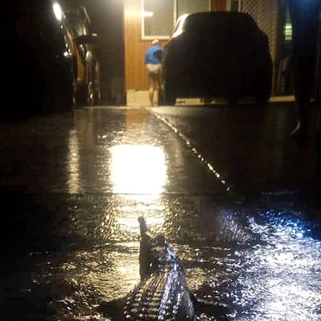Mann steigt in einer Garage in ein Auto. Davor lauert ein Krokodil.