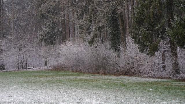 Schäumchen Schnee am Waldrand.