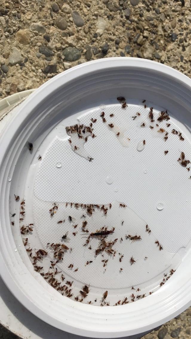 weisser Plastikteller mit vielen kleinen Fliegen drauf