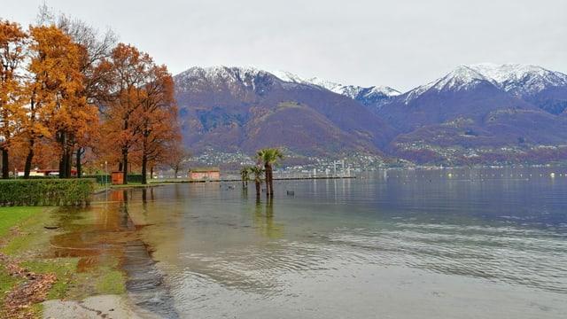 Uferbereich, Wasser reicht bis auf Wiese.