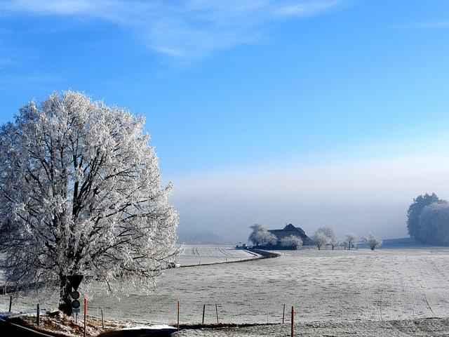 Eine Strasse schlängelt sich über ein schneebedeckte Landschaft. Ein Baum ist mit Raureif belegt. Der Nebel hat sich verzogen und der Himmel ist blau.
