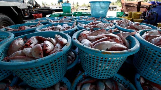 Fischmarkt in Thailand