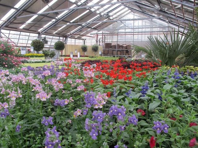 Im Gewächshaus des Gartencenter warten zahlreiche Blumen auf einen Käufer.