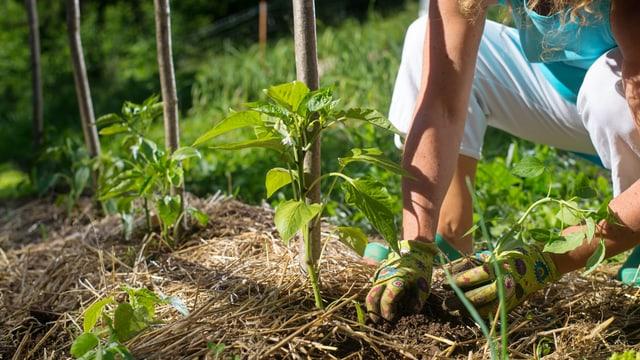 Gärtnern mit Mulch