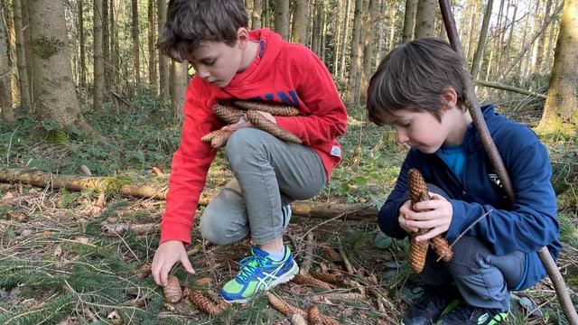Jungen sammeln Tannzapfen