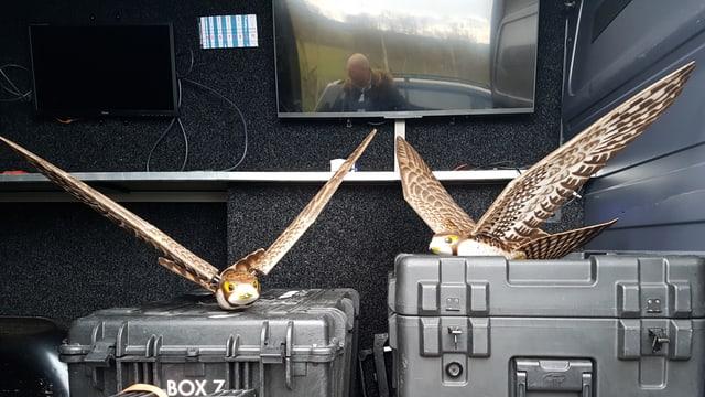 Zwei Robirds auf Kisten im Einsatzwagen.