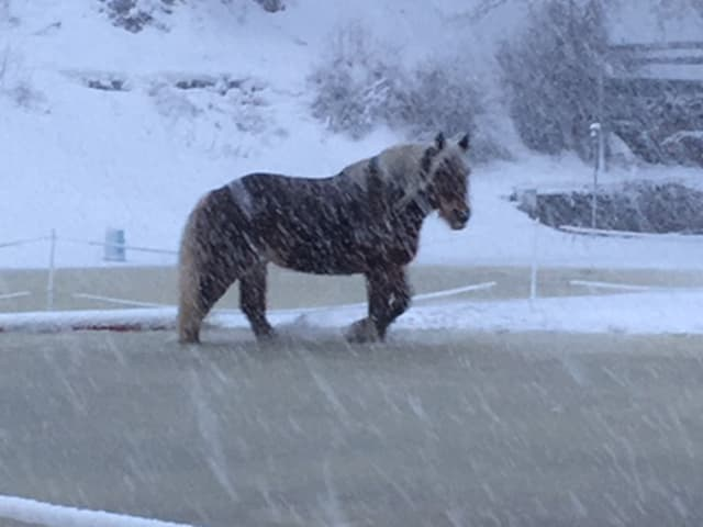 In Saas-Grund sind nur noch die Pferde unterwegs.