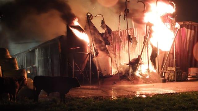 Brand eines Mastbetriebs.