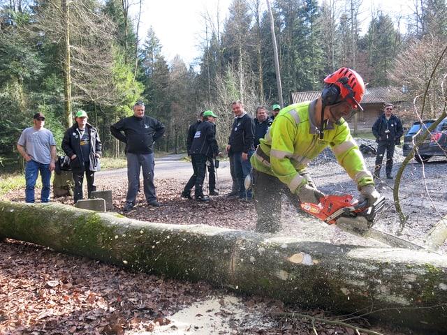 Ein Forstarbeiter bearbeitet den Baum mit der Kettensäge