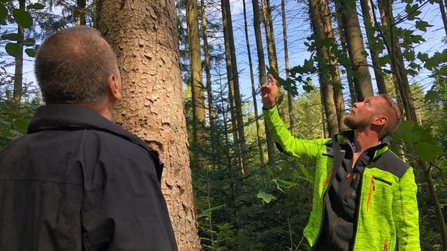 Zwei Männer stehen im Wald und blicken zu einer Fichte hinauf.