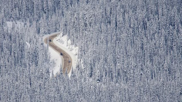 Wald als CO2-Senke