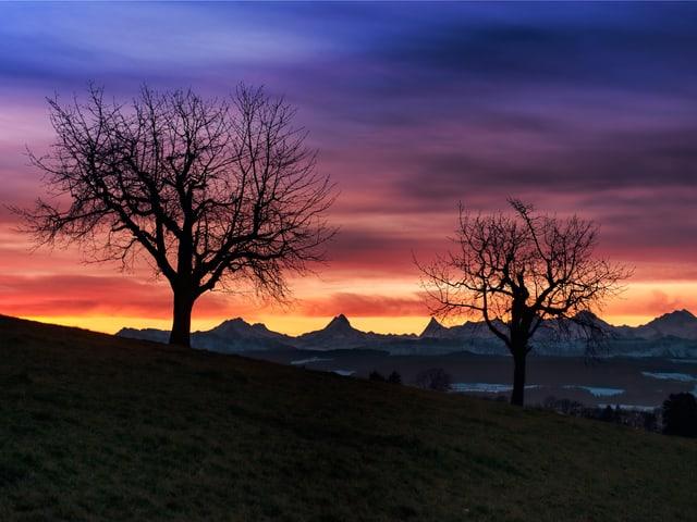 Schon fast kitschiges Morgenrot mit Bäumen im Vordergrund.