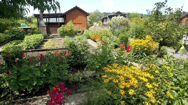 Garten mit Bäumen, Sträuchern, Blumen und Schrebergarten-Häuschen aus Holz
