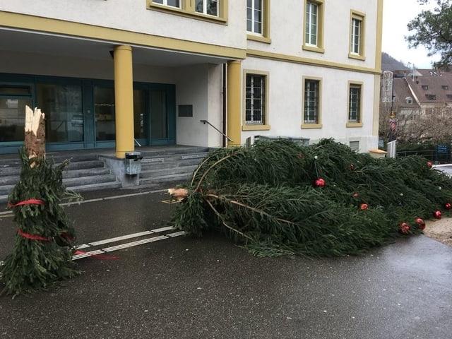 Abgebrochener Weihnachtsbaum