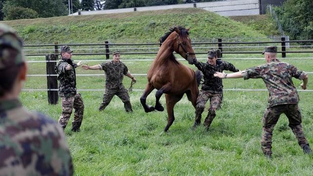 Armeeangehörige und ein Pferd