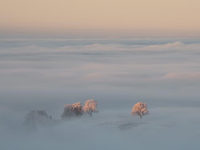 Kurz nach Sonnenaufgang erleuchte die Sonne das Nebelmeer und mit Raureif belegte Bäume.