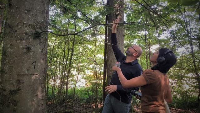 Andreas Rigling erklärt, worauf es bei den Bäumen im Wald der Zukunft ankommt