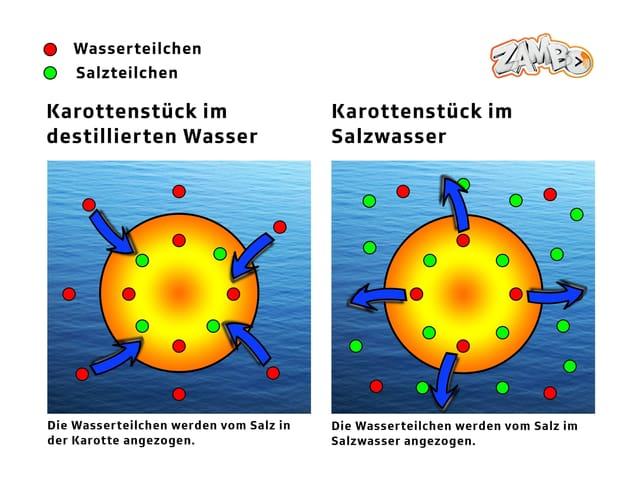 Darstellung Salz Karotte