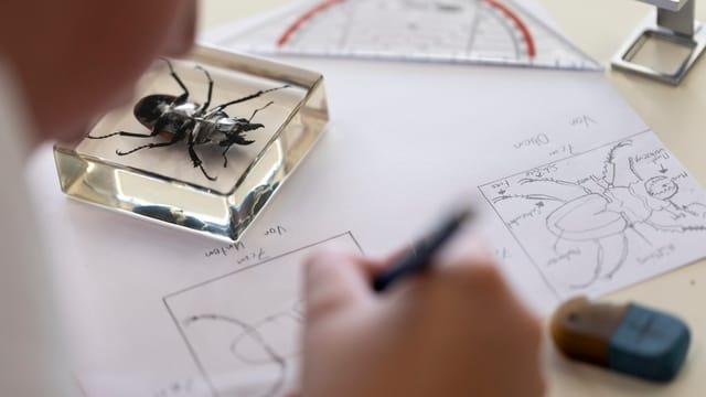 Schüler bearbeitet ein Biologieblatt. Symbolbild.