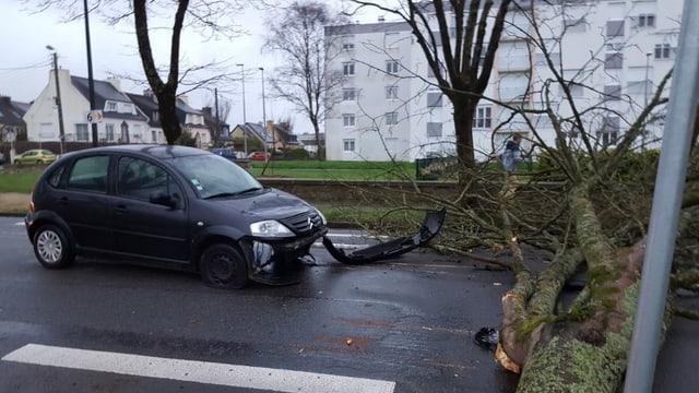 Ein Auto wurde von einem umgestürzten Baum getroffen.
