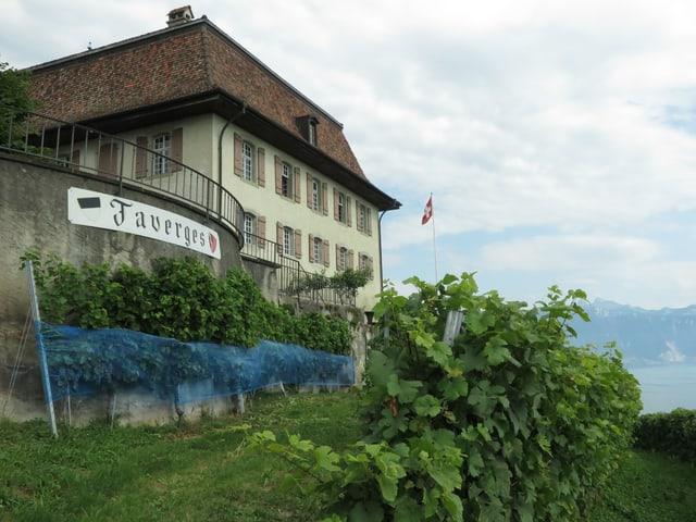 Weingut Lavaux