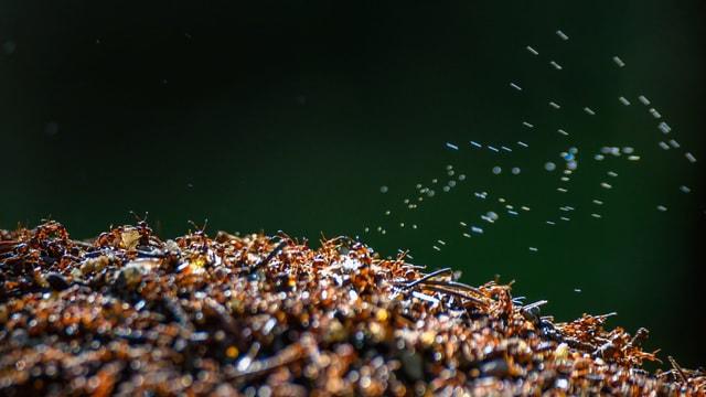 Ameisenhaufen mit Tropfen in der Luft.