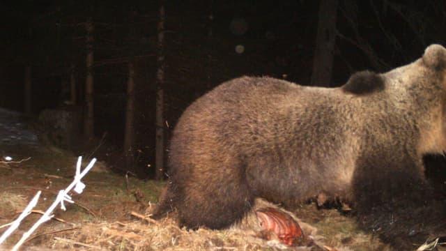 In dals dus urs, fotografà da la trapla.