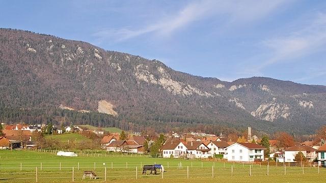 Dorfansicht Lommiswil, im Vordergrund Pferd auf einer Weide, im Hintergrund Jura-Kette