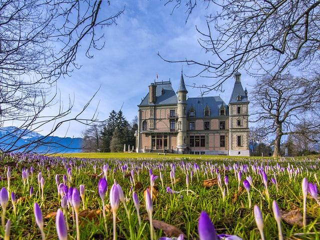 Blick auf ein Schloss mit einer Blumenwiese im Vordergrund.