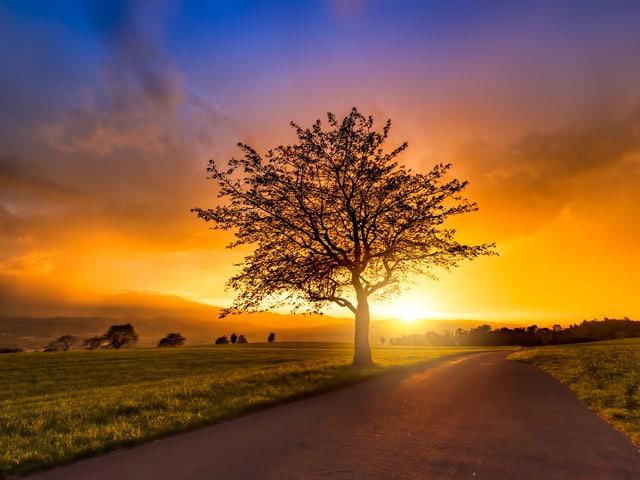 Baum im Abendlicht.