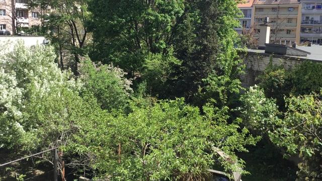 Blick auf einen Innenhof. Viele Bäume.
