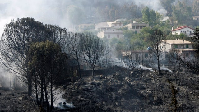 Waldbrand in Sizilien