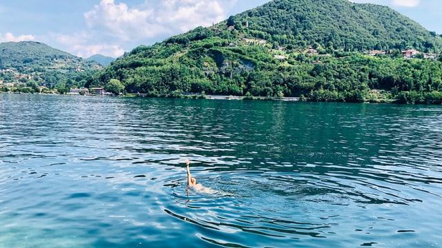 Annette König schwimmt im Lago d'Orta