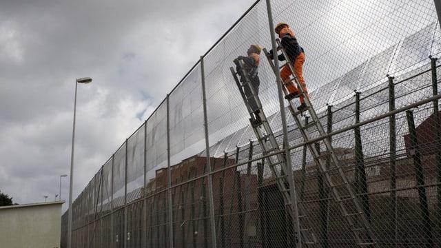 Zwei Männer verstärken den Grenzzaun auf Leitern.