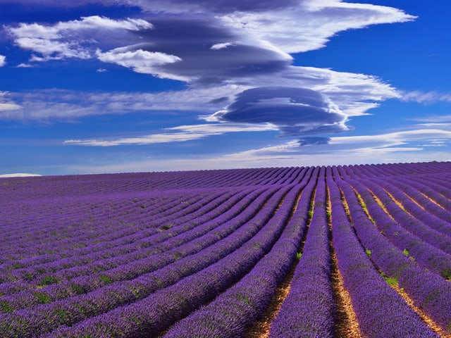 Lavendelfeld im Rhonetal bei mistral