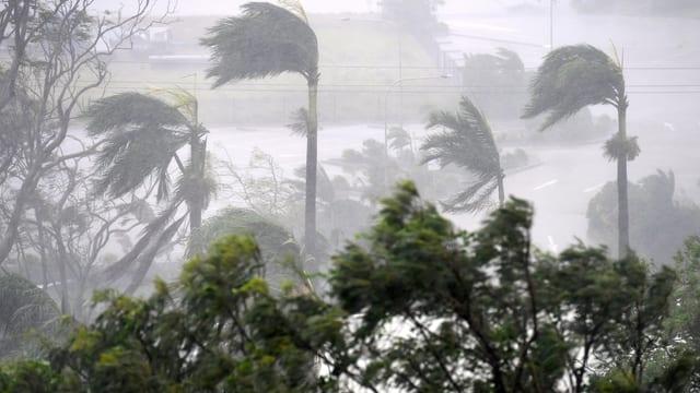 Regen peischt in Australien über vom Wind gekrümmte Palmen.
