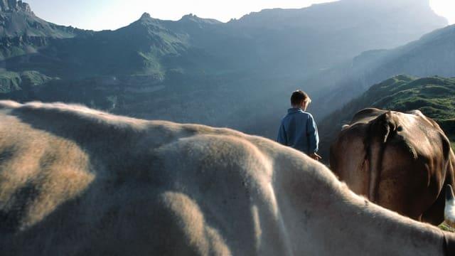 Kind mit Kühen auf einer Alp