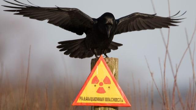 Rabe in Tschernobyl