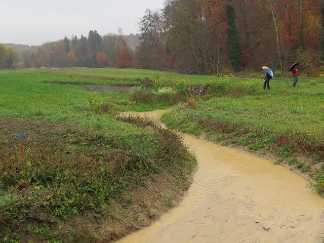 Brauner Wasserbach durch ein Feld.