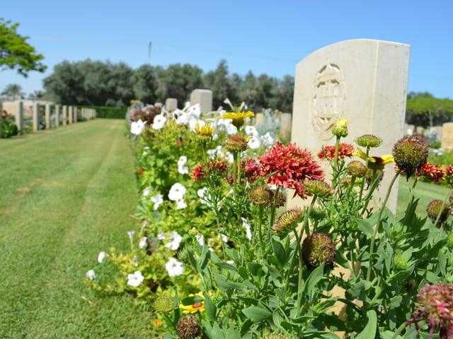 Eine mit Blumen bepflanzte Grabreihe.