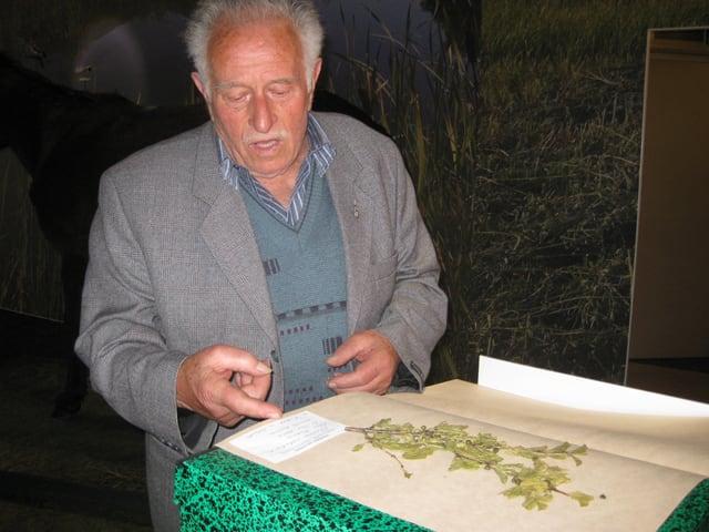 Der Botaniker Egidio Anchisi zeigt eine gepresste Pflanze mit Blättern und Blüten.